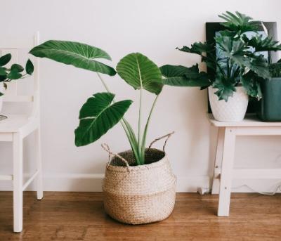 Kamerplanten kopen | Tuincentrum de Driesprong in Zoetermeer